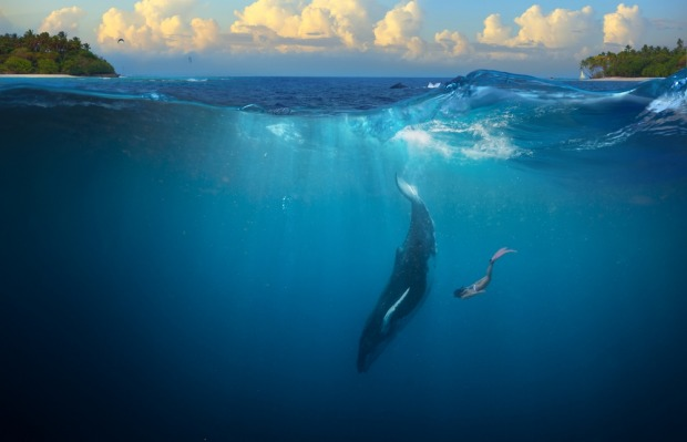 The star attraction is swimming with humpback whales from Vava'u.