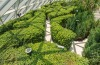 Hedge maze at Canopy Park.