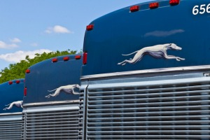 Greyhound buses lined up in the US.