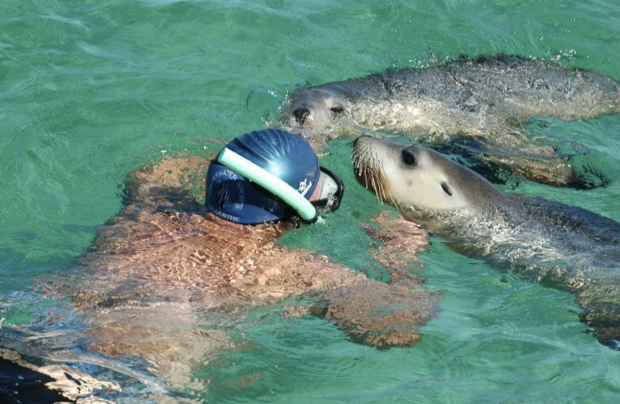 Swim with sea lions: From a small hamlet on the Eyre Peninsula's western coast, Baird Bay Ocean Eco Experience takes ...