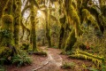 Hoh Rain Forest receives about four metres of rainfall a year.