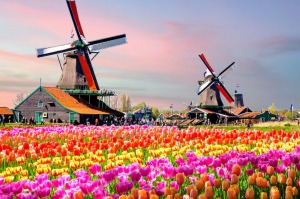 The tulip-filled fields of the Netherlands are a spectacle every traveller should see at least once.