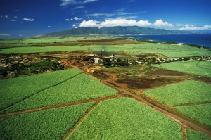 Cane fields and sugar mill at Paia Maui.