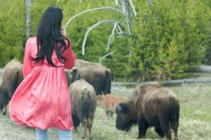 Trying to get a close-up of Bison at Yellowstone is not recommended.