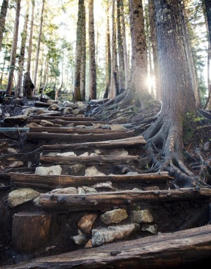 A few of the Grouse Grind's 2830 stairs.