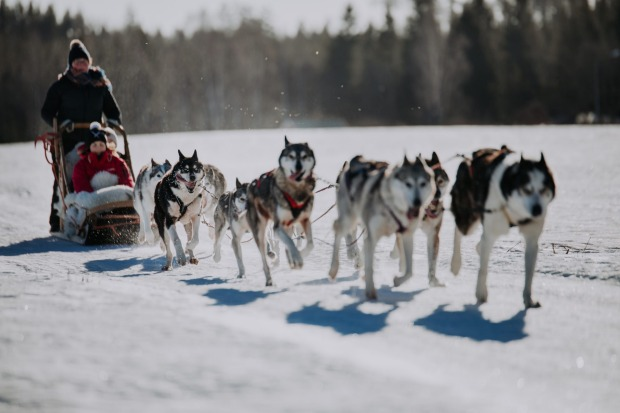 HUSKY SLEDDING IN LAPLAND  Northern Finland might be best known as the home of Santa Claus, but you've good reason to ...