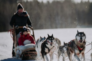 Husky sledding in Lahti, Finland.