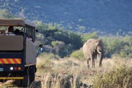 Discover South Africa's wildlife.