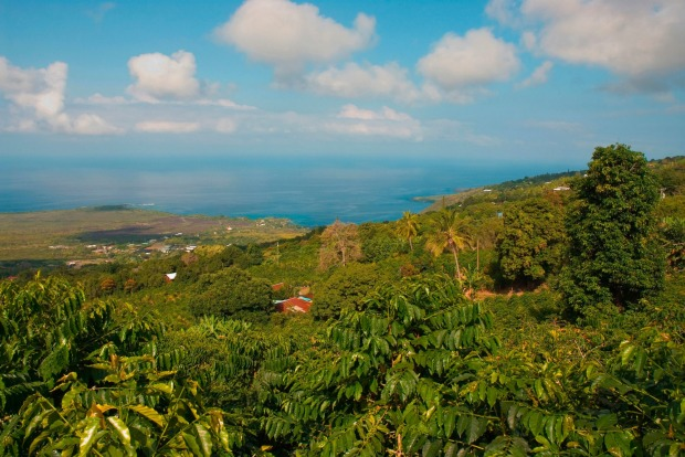 COFFEE: Hawaii's coffee industry began in the town of Captain Cook on the western side of the Big Island when Samuel ...
