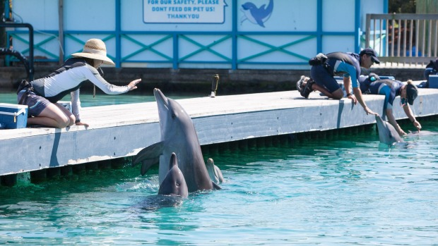 Sea World says the health and wellbeing of animals were its top priority and it has a strong reputation for caring for ...