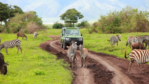 There's never any shortage of wildlife on a game drive around Ngorongoro Crater in Tanzania.