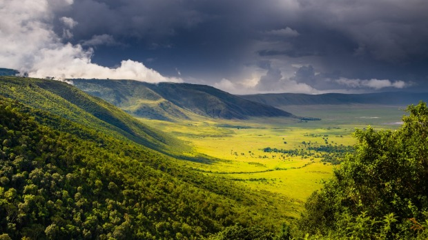 AForest in the Ngorongoro Crater.