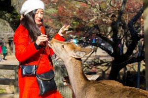 Nara Park is home to over 1200 wild sika deer.