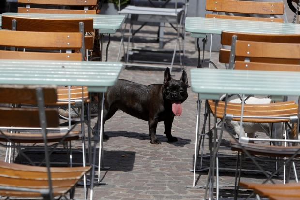 A dog sticks his tongue out in Lille, northern France.