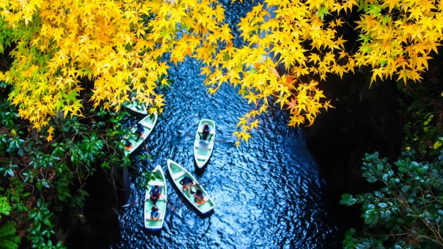 Takachiho Gorge's Yellow leaves