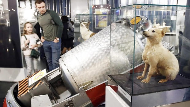 Belka and Strelka, the first dogs in outer space.