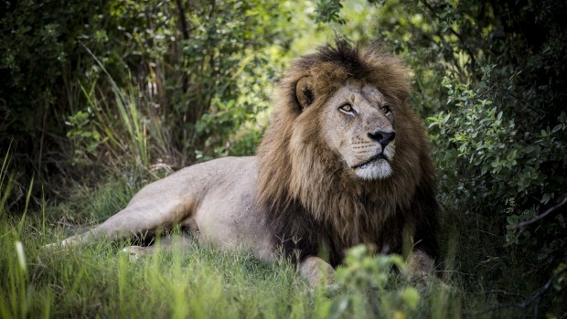 The best places to see lions in Africa: The world's most