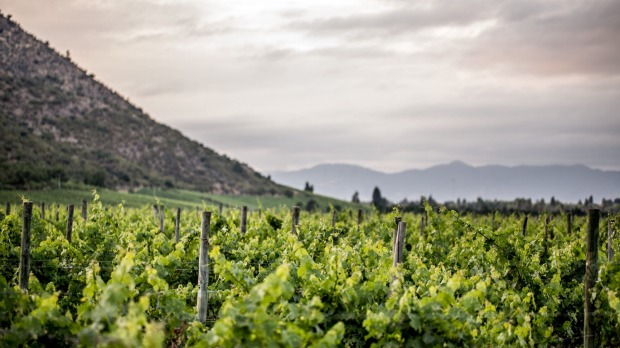 Veramonte Winery in the Casablanca Valley, which produces more than 2.1 million bottles of wine a year.