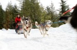 GO DOGSLEDDING  Fur trappers, traders and First Nations all used dog-powered sleds to traverse Canada's frozen ...