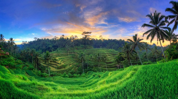 Capella Ubud offers a rice paddy trek that provides insight