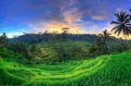 Ceking Rice Terraces in Ubud.