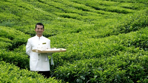 Butler service in the tea plantations at Cameron Highlands Resort.