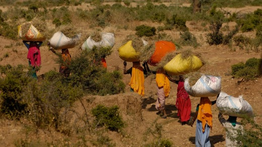 Village women carrying dried sticks home for firewood.