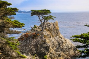 Lone Cypress: The most photographed tree in the US.