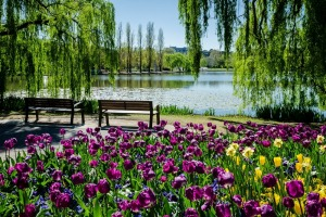 A scenic landscape of Floriade, the annual Canberra spring festival.