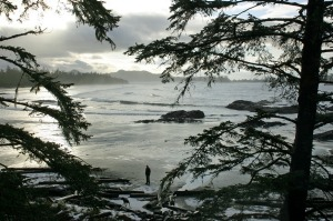 A winter's evening among the pine trees and waves of Chesterman Beach