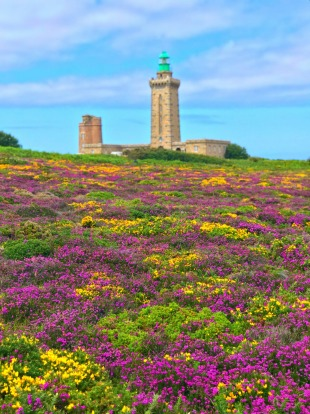 Wildflowers at Cape Frehel, Brittany.