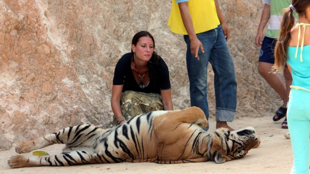 The Buddhist temple west of Bangkok was once a tourist hotspot where visitors took photos with tigers and bottle-fed ...