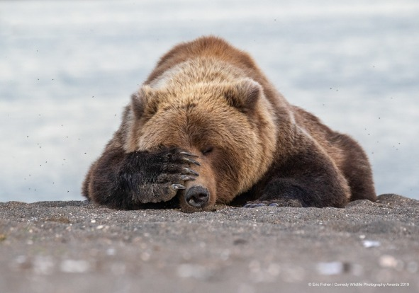 Monday Morning Blues. In Alaska this past summer, we were watching brown bears catching salmon out of a small river. ...