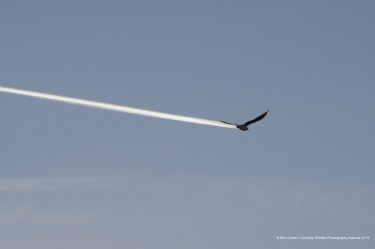 Is it a bird, is it a plane? I had imagined this photograph for some time but could I be lucky enough to capture the ...