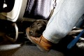 You won't find emotional support animals on board Australian flights.
