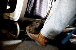 US airlines are banning emotional support animals on planes.