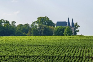 Medoc's beautiful vineyards.