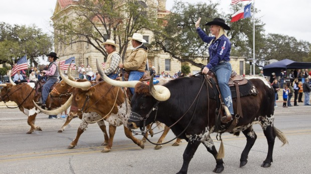 Cowboys riding Longhorn bulls in Veterans Day Parade.
