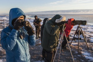 Tourists capturing the wildlife in Hudson Bay.