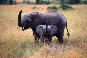 Come face to face with an elephant in Zimbabwe.