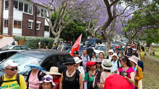 Chinese tourists visit the jacaranda trees in bloom on McDougall St, Kirribilli, Sydney.