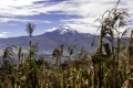 Snowcapped Cayambe Volcano in the Ecuadorian Andes.