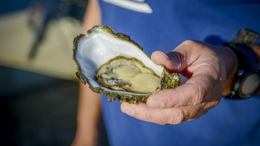 Greenwell Point oysters.