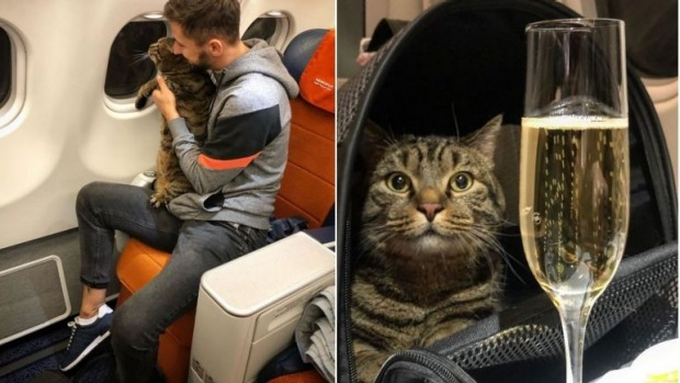 Passenger stripped of miles for sneaking fat cat into business cabin