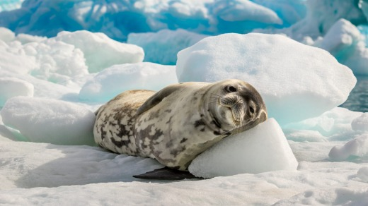A seal rests on an iceberg.