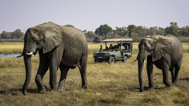Elephant spotting on safari.
