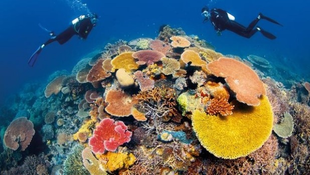The Great Barrier Reef lives up to the name.