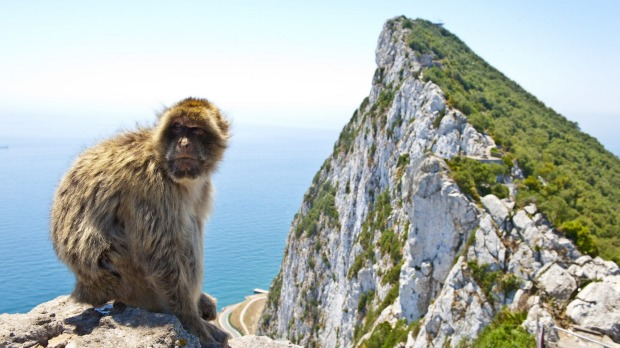 A monkey sitting on top of the rock above Gibraltar.
