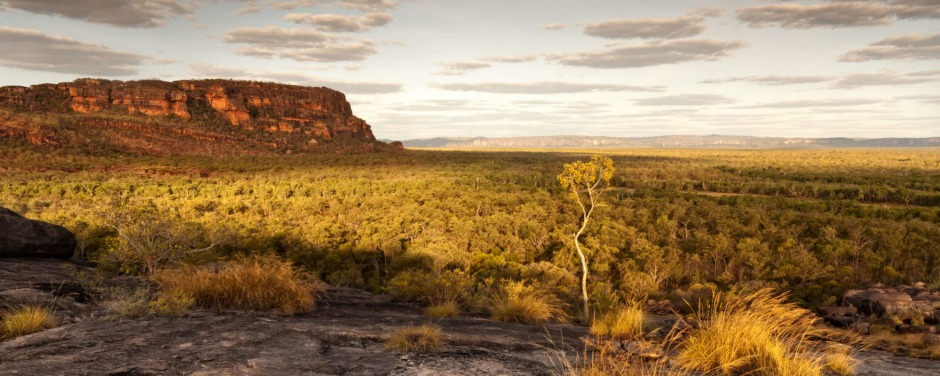 A single tree catches the last light at dusk in Nourlangie badlands, Kakadu National Park ...