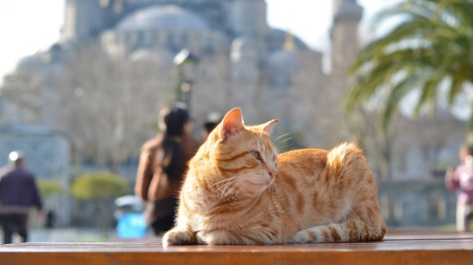 Another cat - this time behind the Sultanahmet Mosque.